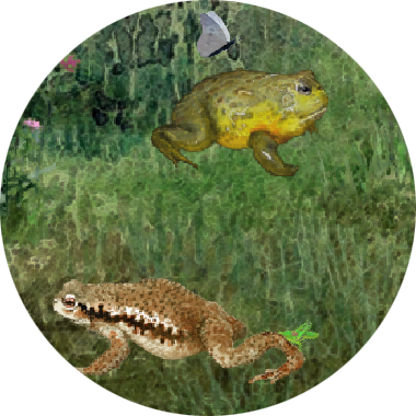 FrogMinutes-icon.png