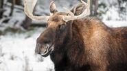 Moose-1-gty-er-200303 hpMain 16x9 992