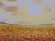 Iksay Rice Field