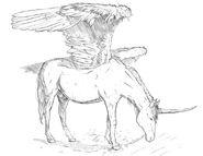 DN, Alicorn