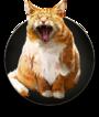 Uselesscat.png