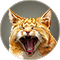 Uselesscat icon.png