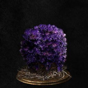 Purple Moss Clump.jpg