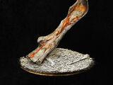 Homeward Bone