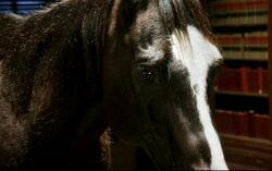 Badhorse.jpg
