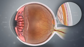3D Medical Animation Eye Structure.jpg