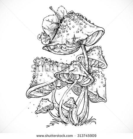 Manipulação de Fungos
