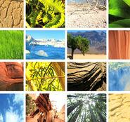 Environmental Adaptations-Superpower Superhuman Ability