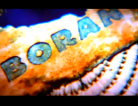 Boran into shot