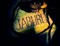Jaburu into shot