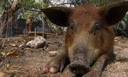Pig ep11