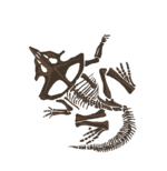 CERATOPS insig.png