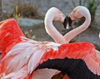 Dance+of+Love-3445.jpg