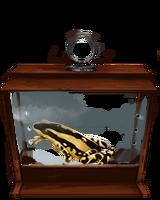 Harlequin Toad.png