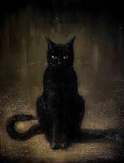 Czarny kot.jpg