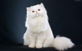 Biały Kot.jpg