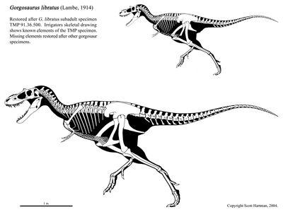Albertosaurus libratus.jpg