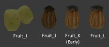 FruitsE3