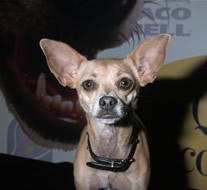 Taco Bell Dog.png