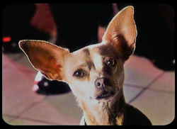 Taco Bell Chihuahua.png