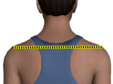 Shoulder Width (measurement)