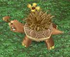 Mature Grass Tortoise