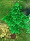 Defoilate Pine.jpg