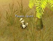 Fungus Sport.jpg