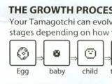 Tamagotchi Life Cycle