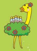 Sales bird sorette kuchi