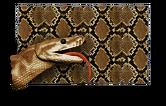 Python Paint