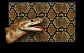 Python Paint.png