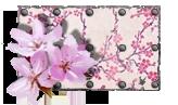 Sakura Paint.png