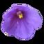 Craftitude ingredient violet