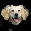 Craftitude ingredient dog