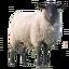 Craftitude ingredient lamb
