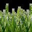 Craftitude ingredient grass