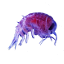 Craftitude ingredient plankton