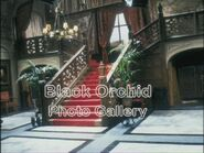 Black Orchid Photo Gallery