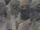 Exxilon (species)