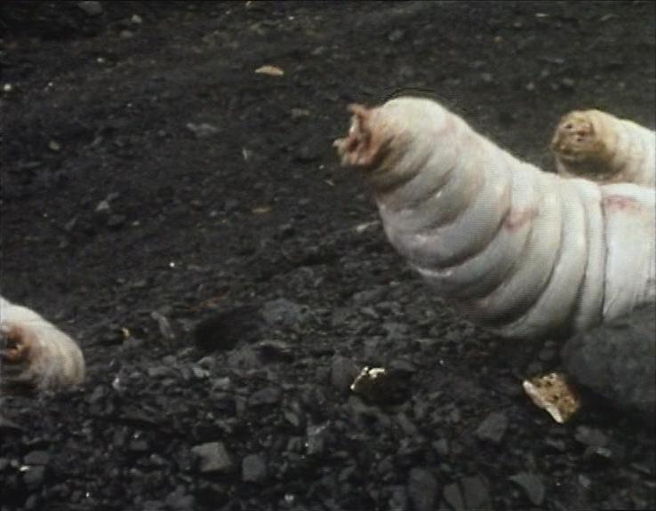 Giant maggot