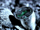 The Master's ring