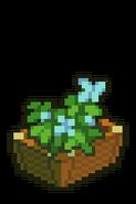 Boxed Blue Plant
