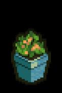 Potted Orange Plant
