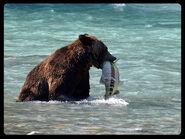 Bearwhale