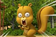 Tayo the little bus squirrel