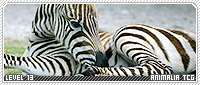 Animalia b2