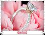 Sheva-spree