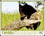 Chiisai-phenomena