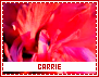 Carrie-dashes